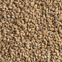 Солод пивоваренный пшеничный 50 кг