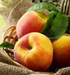 Наливка из персиков