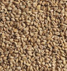 Солод пивоваренный пшеничный 25 кг