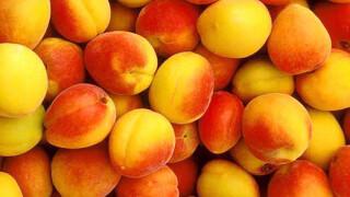 Самогон из абрикос
